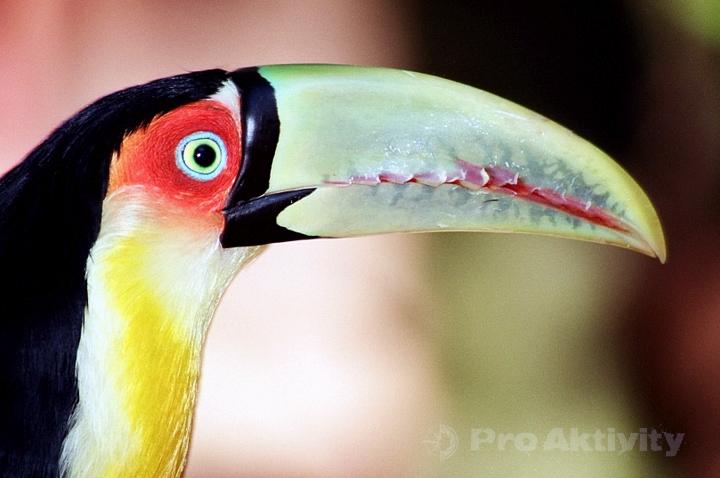 Brazílie - Foz do Iguaçu - Parque das Aves