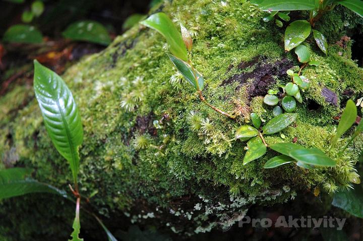 Malajsie - Cameron Highlands - výstup na Gunung Brinchang