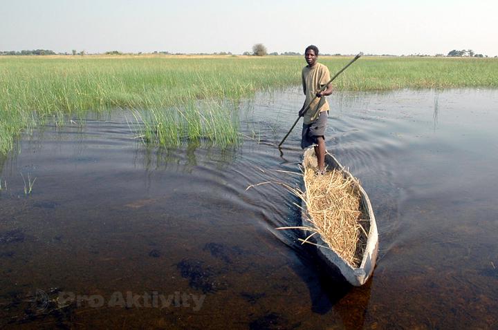 Botswana - řeka Okavango - připlouvá průvodce na člunu mokoro