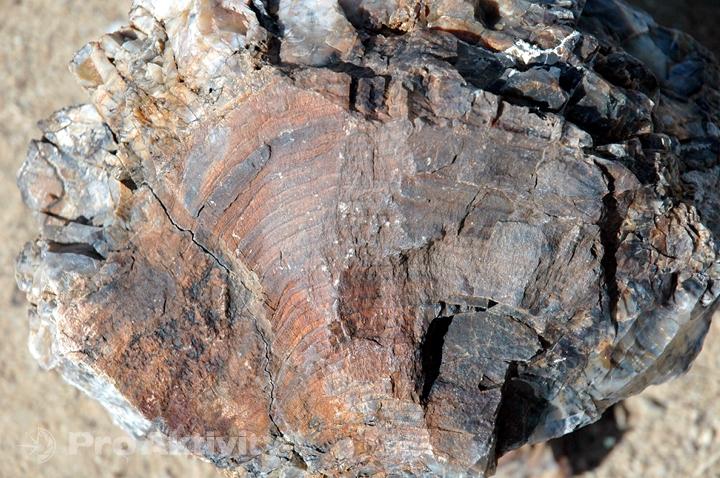Namibie - Kaokoveld - Zkamenělý les