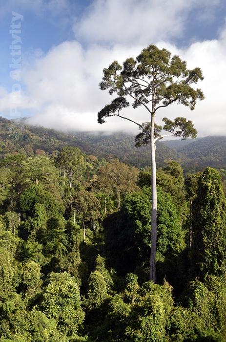 Malajsie - Sabah - Pánev Maliau (Maliau Basin)