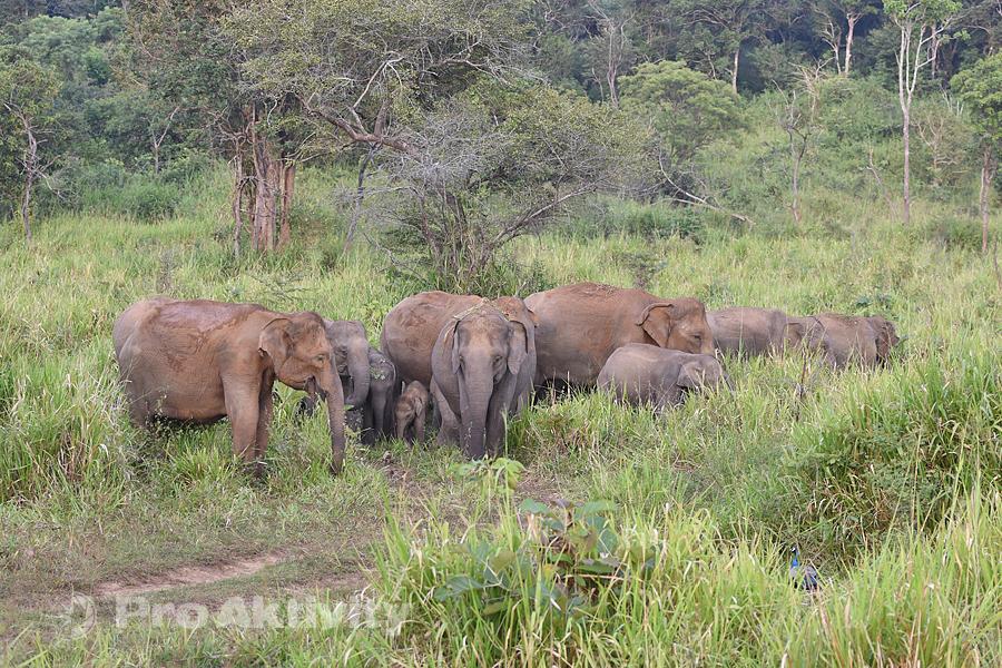 Šrí Lanka - Hurulu Eco Park
