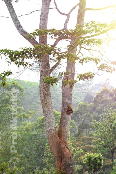 Šrí Lanka - Talawakelle - západ slunce z terasy čajovny
