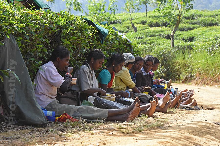 Šrí Lanka - Lindula - čajové plantáže, svačina sběraček