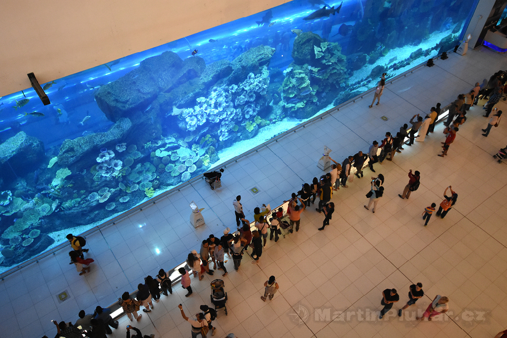 akvárium v Dubai Mall