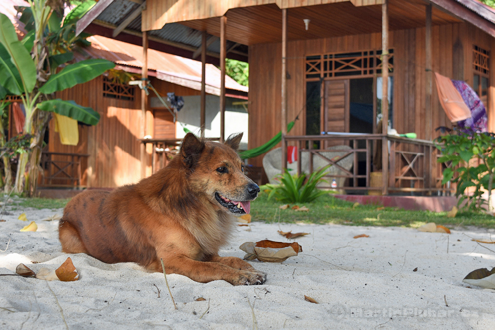 Togianské ostrovy, ostrov Malenge, chatky Malenge Indah a pes Opan