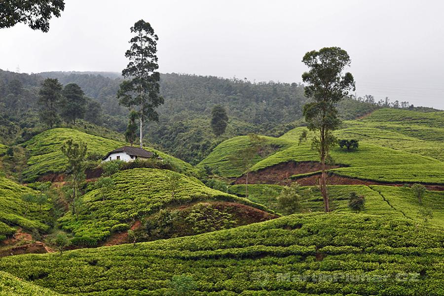 Nanuoya - Mezi čajovníkovými plantážemi