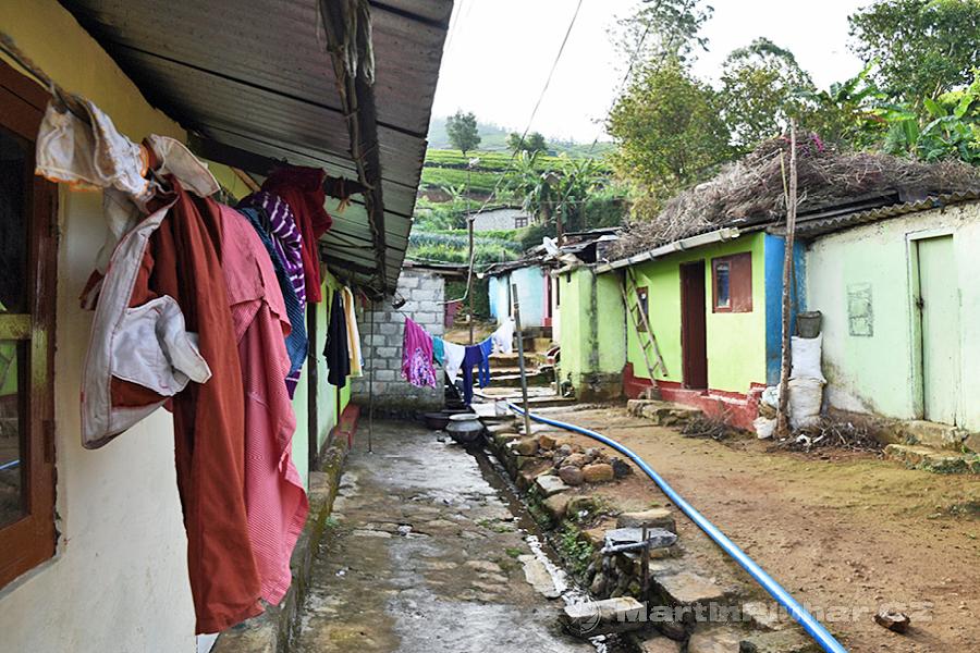 Nanuoya - Na čajovníkové plantáže procházíme mezi domky