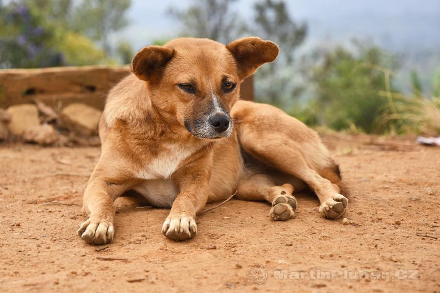 Radella - Další z mnoha toulavých psů