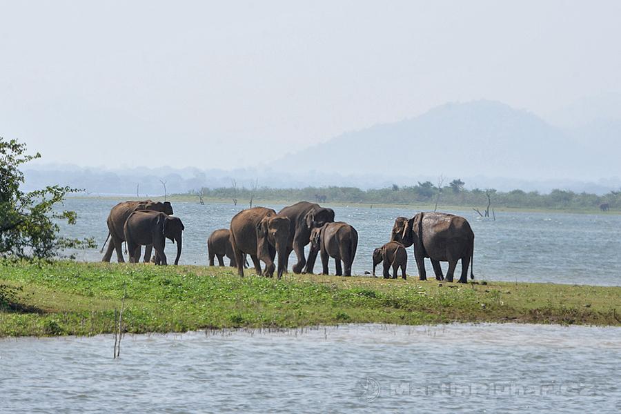 NP Udawalawa - Sloníci