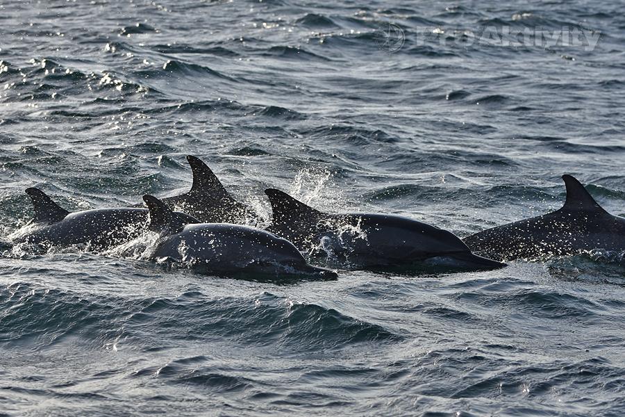 Šrí Lanka - Trinkomalé - pozorování delfínů