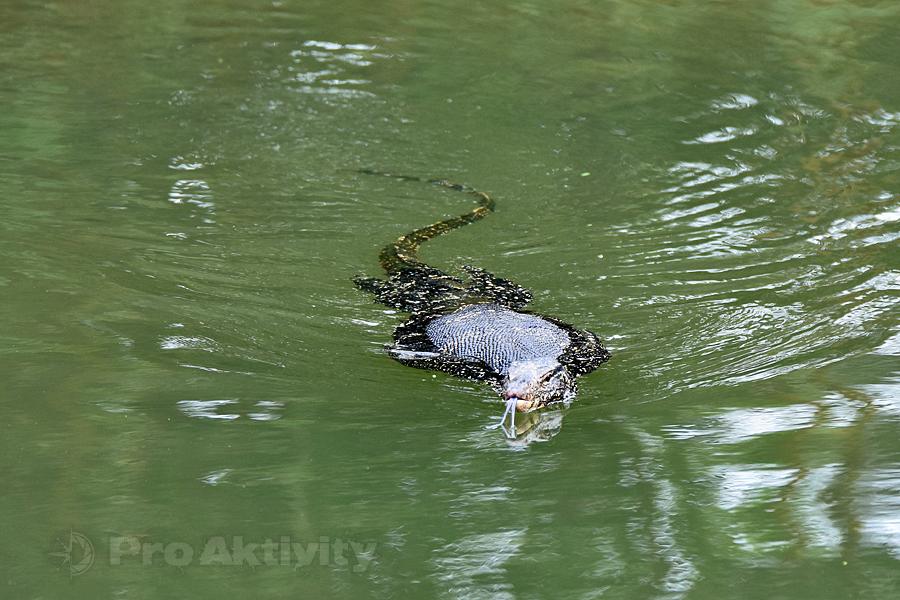 Šrí Lanka - Polonnaruwa - varan