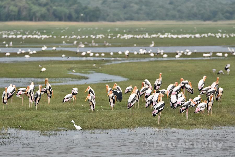 Šrí Lanka - NP Kaudulla