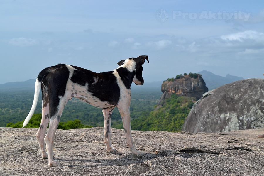 Šrí Lanka - Sigirija - Pidurangala, pohled na Lví skálu