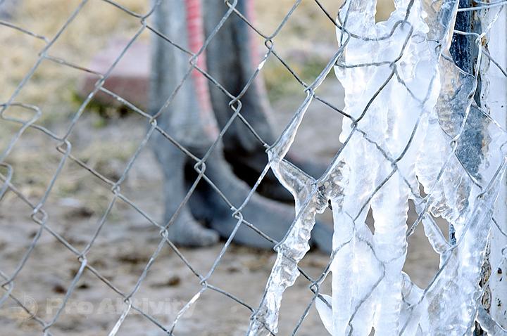 Namibie - Gobabis - rampouchy na plotě, -3°C (v pozadí jsou pštrosí nohy)