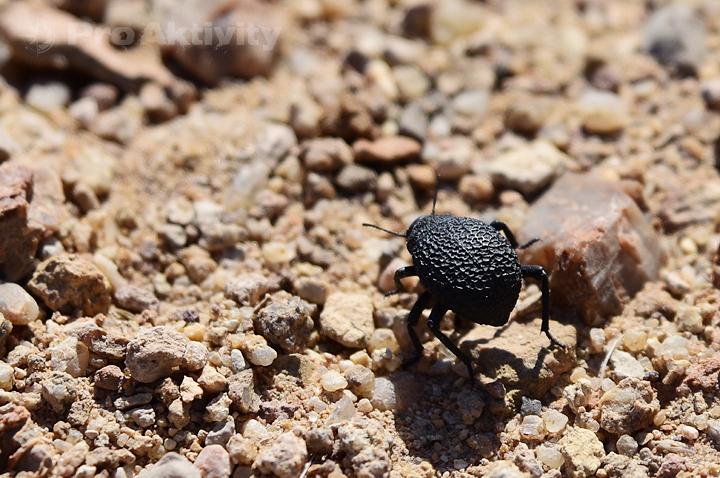 Namibie - Petrified Forest - potemník