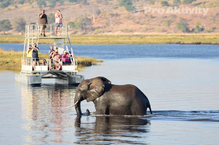 Botswana - NP Chobe - zkušení lodivodi respektují divoká zvířata