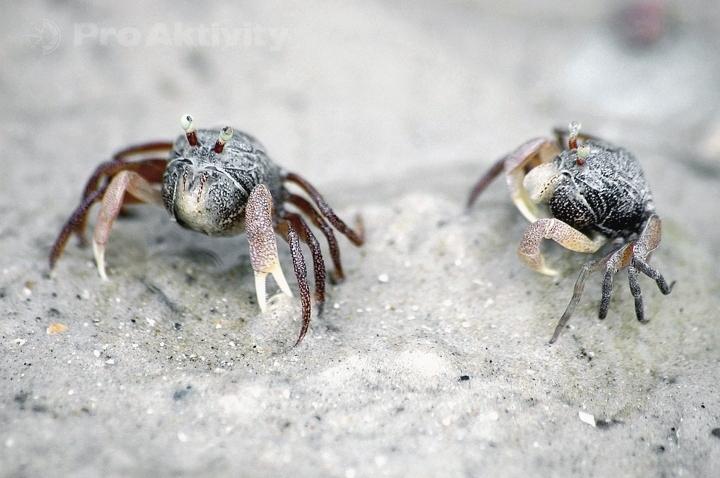 Thajsko - Krabi - krabi, pláž Nopparat Thara