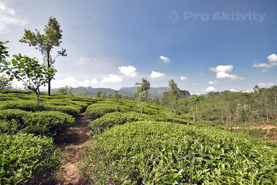 Šrí Lanka - Lindula - čajové plantáže