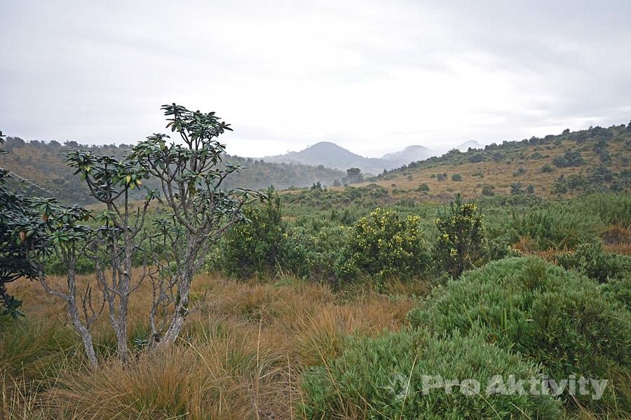 Šrí Lanka - Hortonovy pláně ještě s ranním oparem