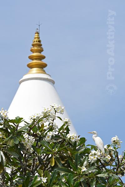 Šrí Lanka - Kataragama - dagoba Kirivehara
