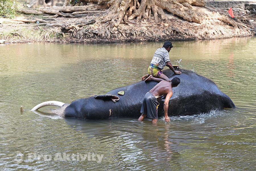 Šrí Lanka - Kataragama - koupání slonů v řece Menik