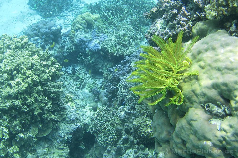 Togianské ostrovy, ostrov Malenge, korálový útes