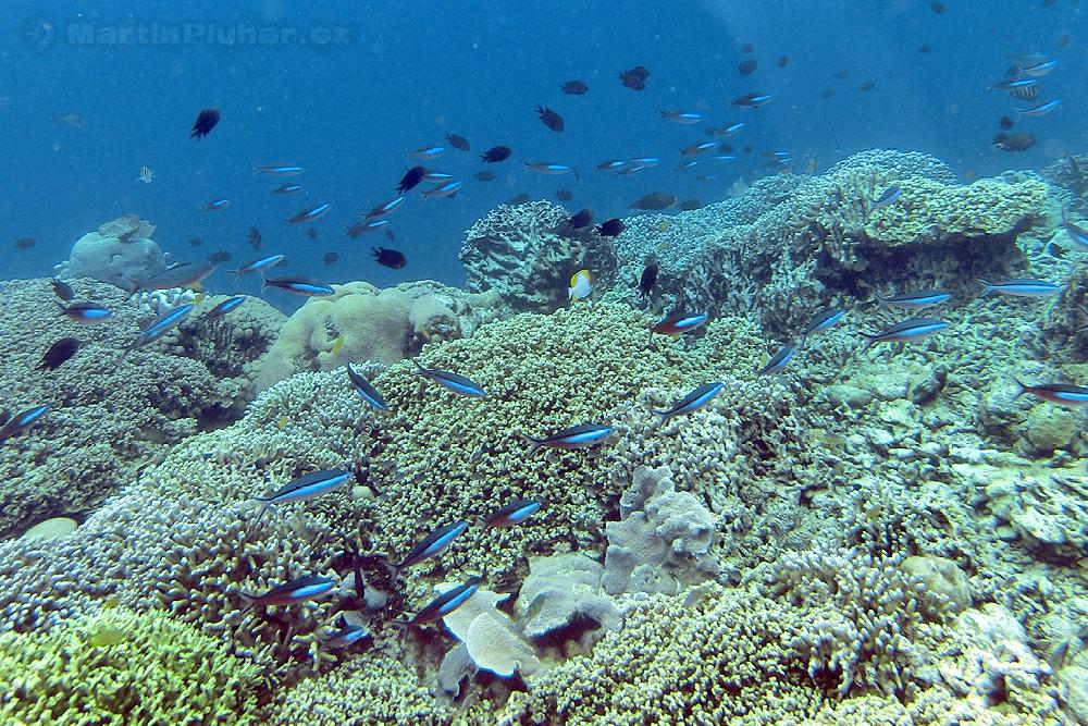 Ostrov Bunaken, korálový útes