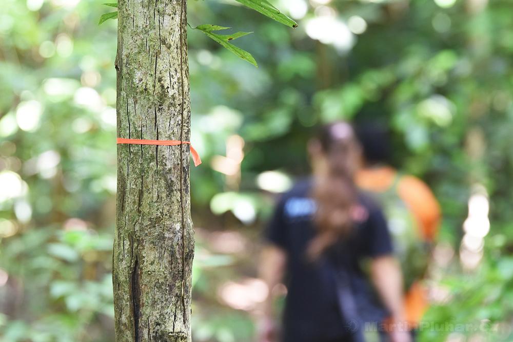 Přírodní rezervace Tangkoko Batuangus, značení stezek
