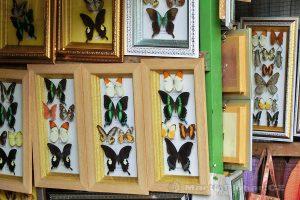 ostrov Sulawesi - Bantimurung - prodej motýlů