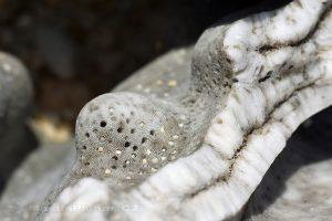 Moluky, Bandské ostrovy - ostrov Nailaka - zkamenělí koráli