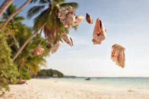 Moluky, Keiské ostrovy - Malý Keiský ostrov - Ngurbloat - mušličky z pláže Pasir Panjang
