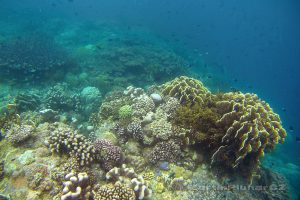 Moluky, Bandské ostrovy - ostrov Ay - korálový útes pod okny