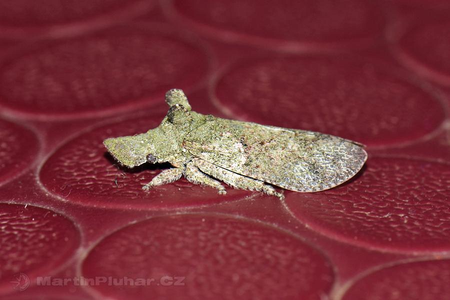 Ella - Zajímavý hmyzáček na podlaze pokoje