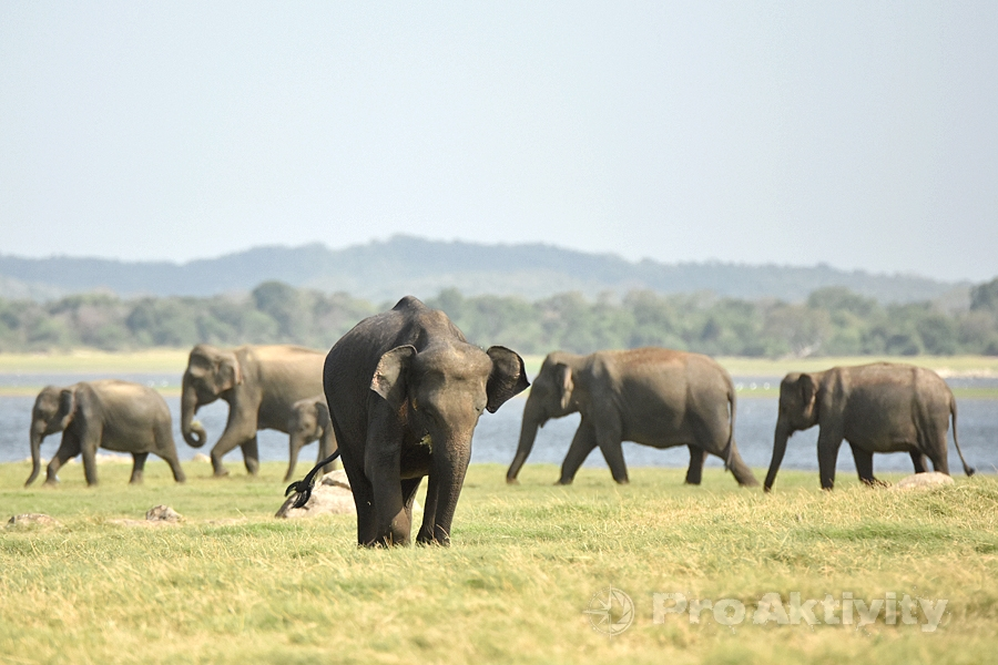 Šrí Lanka - NP Minnérija