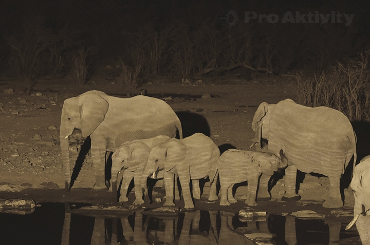 Namibie - NP Etosha, napajedlo Moringa - sloni afričtí