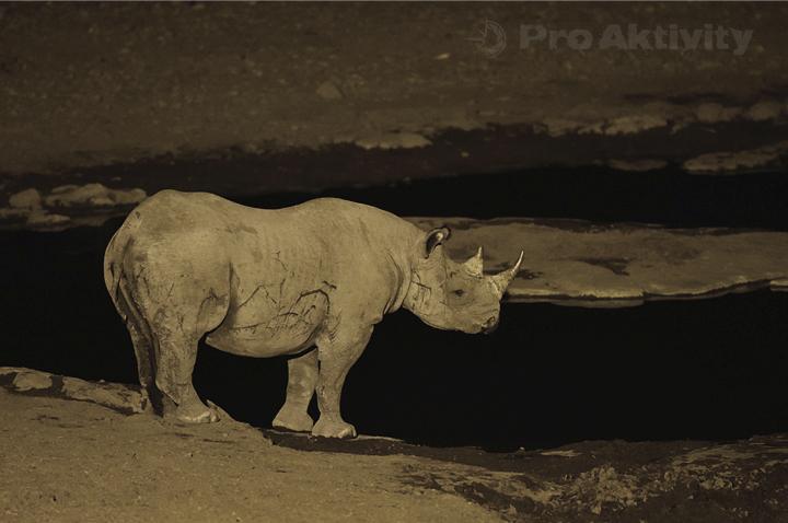 Namibie - NP Etosha, napajedlo Moringa - nosorožec dvourohý