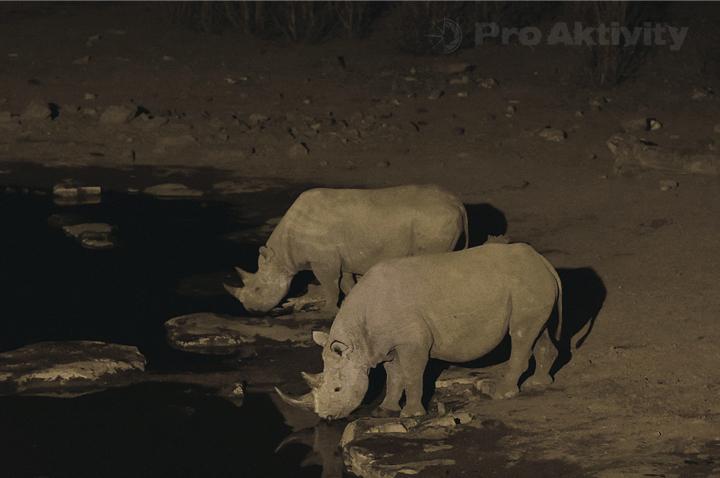 Namibie - NP Etosha, napajedlo Moringa - nosorožci dvourozí