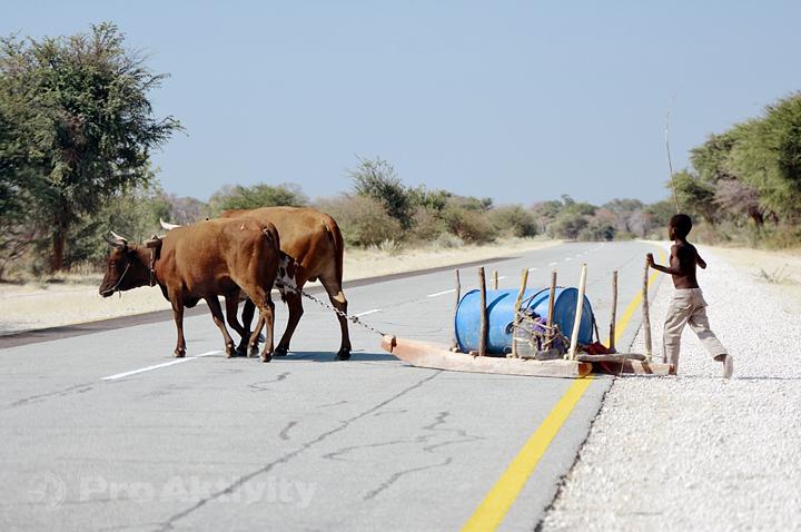 Namibie - Zambezi, Linyanti