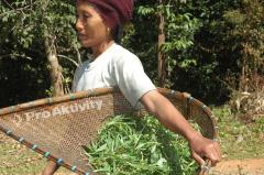 Laos - Kong Lo