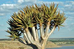 Namibie - NP Hardap