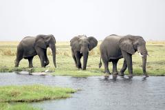 Botswana - NP Chobe