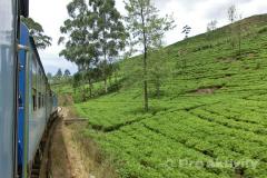 jízda vlakem Ella-Talawakelle
