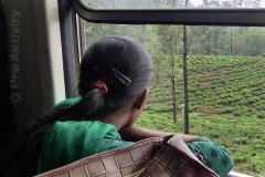jízda vlakem Talawakelle-Ohiya