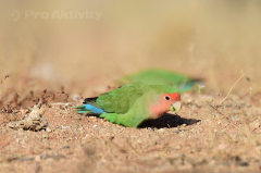 Namibie - Solitaire