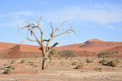 Namibie - Sesriem