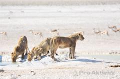 Namibie - NP Etosha