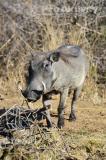 Namibie - NP Bwabwata